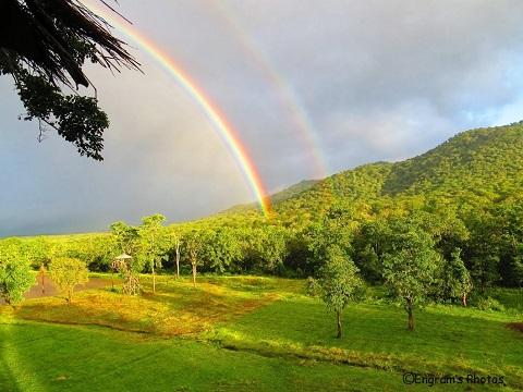 nature-masinagudi-resorts