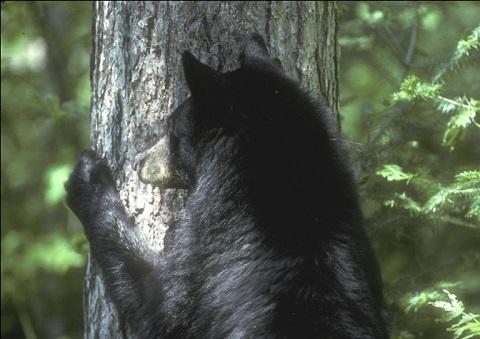2014_jan_sloth_bear
