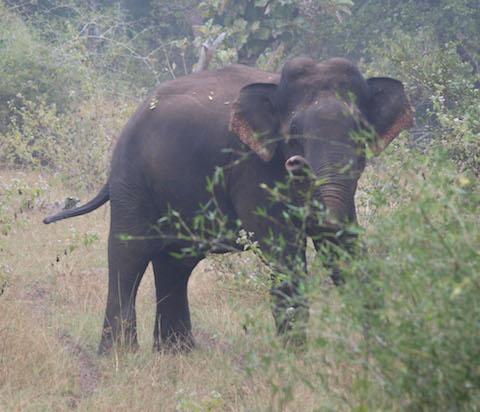 Curious Makna During Nature Walks, InnTheWild Mudumalai